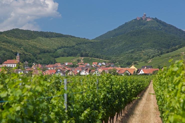 Heiligenstein - clocher - château - Alsace - beauté - vignes